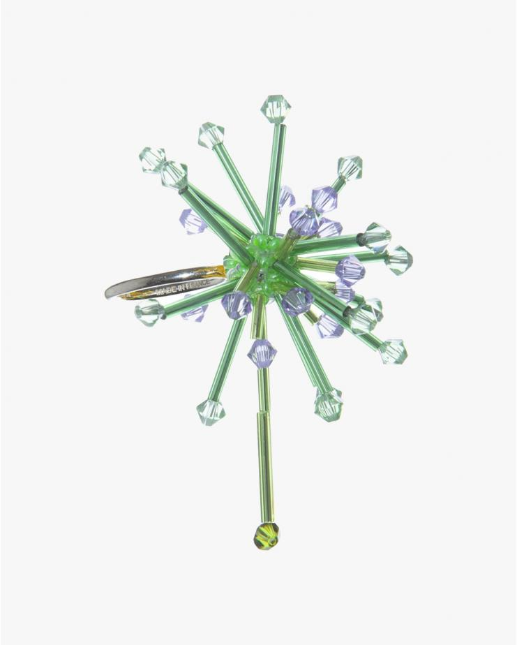 Allium Cepa Ring